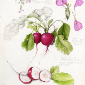 Wendy Hollender, Botanical Illustration: Forage and Draw with Colored Pencil and Watercolor, 2D, Mixed Media