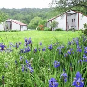 purple iris, new england summer, gray buildings