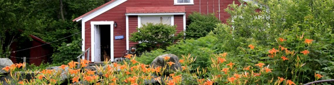 scenery, barn, day lillies, summer